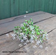 Травка с зеленым цветением